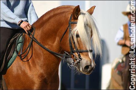 De quelle race est ce poney ?