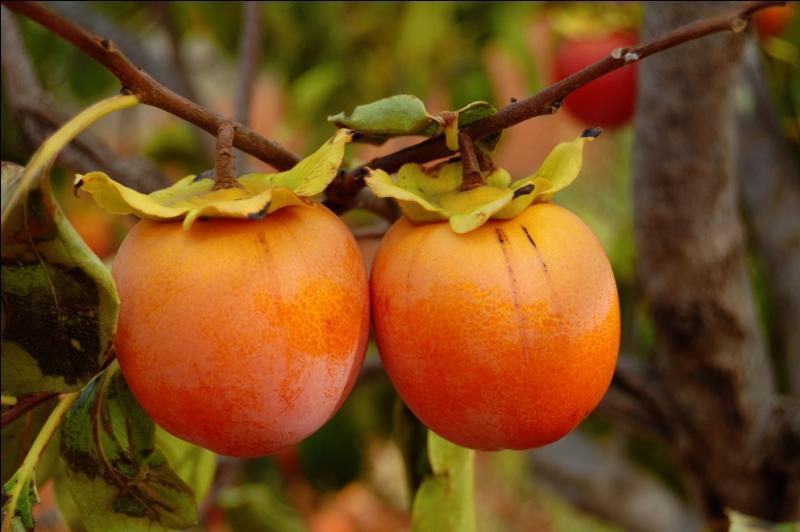 Quel est ce fruit qui pousse sur le plaqueminier dans le Midi, dès septembre ?