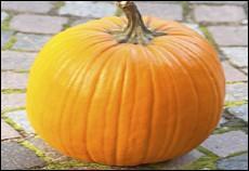 Quel est ce gros fruit orangé, qui peut peser jusqu'à 5 kg, et qui nous est familier, dès novembre ?