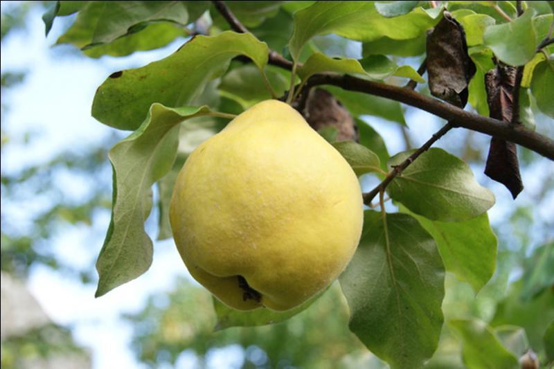 Encore un fruit, bien de saison !