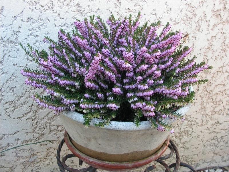 Peut-être porterons-nous quelques fleurs sur nos tombes le jour de la Toussaint :