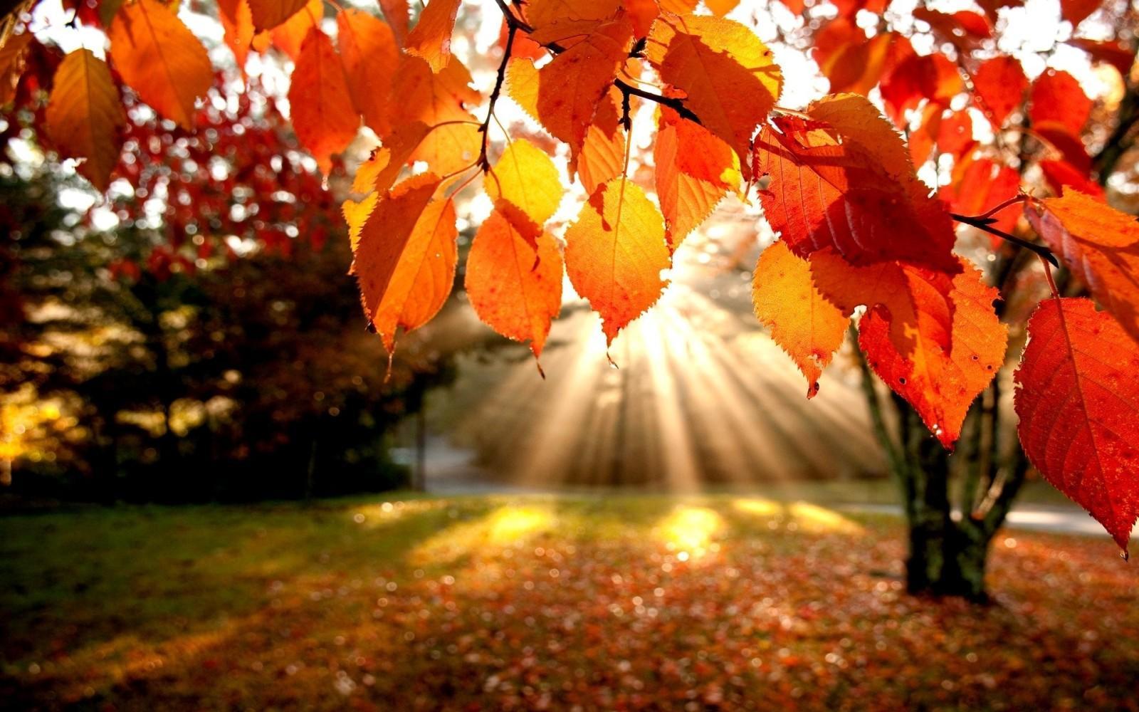 Que faire en automne ?