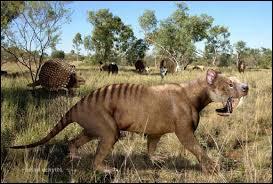 Quel est cet animal aux allures de terrible félin ?