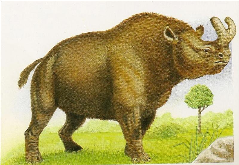 Quel est cet animal aux deux grandes cornes effrayantes ?