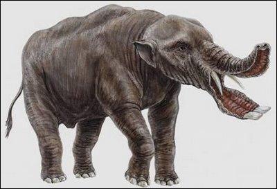 Quel est cet étrange éléphant ?