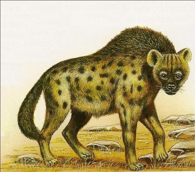 Quel est cet animal à la longue fourrure ?