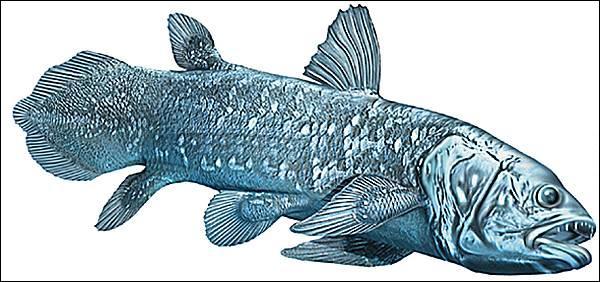 Quel est cet animal qui ressemble à un gros poisson ?