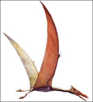 Quel est cet animal capable de voler ?