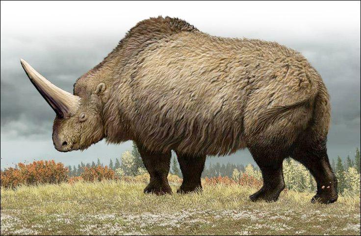 Quel est cet animal avec son énorme corne mesurant plus de deux mètres ?