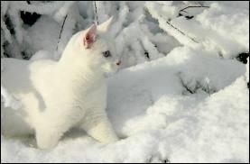 Quizz lgdc vrai ou faux sur flocon de neige quiz - Vrai flocon de neige ...