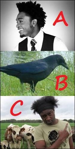 Lequel de ces chanteurs a un point commun évident avec l'animal de la proposition B ?