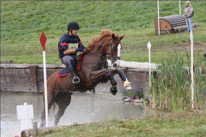 Quizz quitation galop 1 quiz galop equitation cheval - Purger les radiateurs dans quel ordre ...