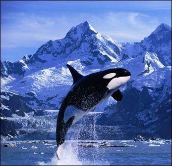 Quel animal, inféodés à l'eau, n'est pas un mammifère ?