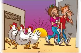 """Que signifie l'expression """"Se coucher comme les poules"""" ?"""
