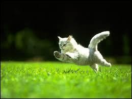 Quelle est la vitesse maximale qu'un chat peut atteindre en courant ?