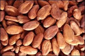 Quelle est la variété de cacaoyer la plus répandue ?