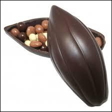 Comment s'appelle le fruit du cacaoyer ?