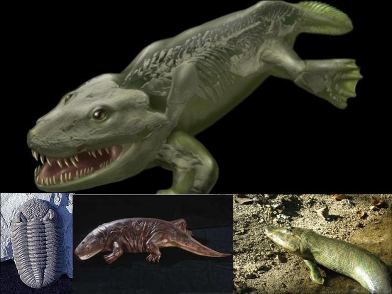 Il y a 440 millions d'années, un grand changement apparaît. Il donnera, bien plus tard et avec de nombreux changements, l'espèce humaine.Que se passe-t-il ?