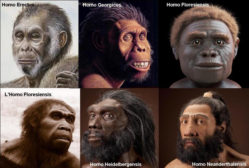 Les hominidés sont nos ancêtres, ils sont apparus il y a 7 millions d'années. L'homo sapiens (nous, autrement dit) est apparu il y a grosso modo 200 000 ans. Nous avons pour ancêtre (« arrière-grand-père ») l'homo erectus (-1 million d'années à -300 000 ans).Sauriez-vous trouver cette espèce « d'homo » qui n'a pas le même ancêtre que nous, l'homo erectus ?