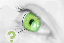 Comment se nomme la partie colorée de l'oeil ?