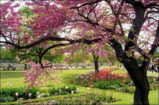C'est le printemps. Quel arbre offre trop de fleurs pour un simple locataire ? (N'oubliez pas de lire la description ! )