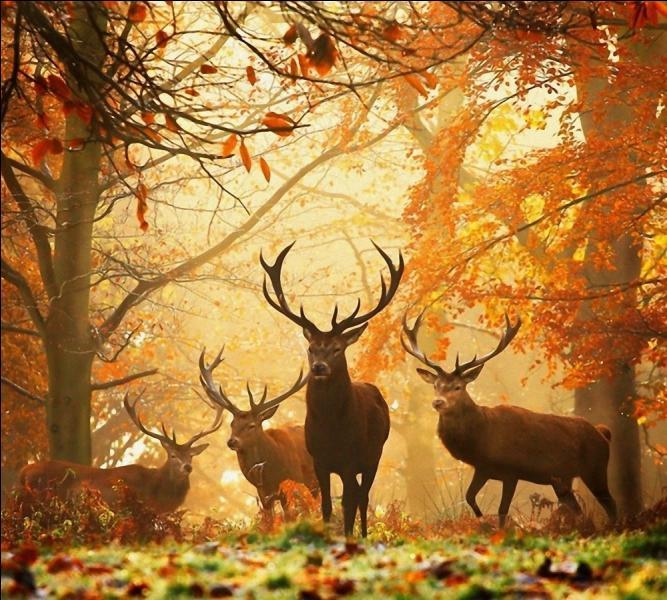 L'automne ! Quel oiseau migre en cette saison ?