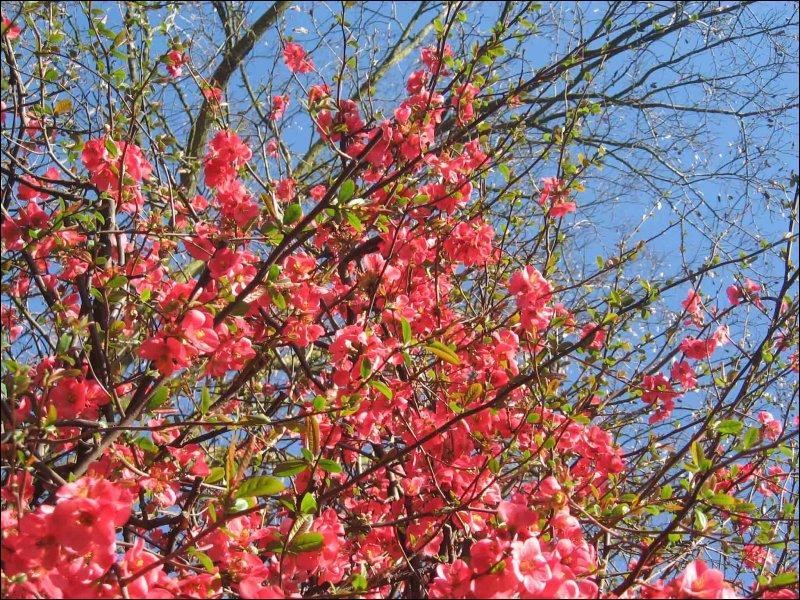 Le printemps ! Quelles fleurs tombèrent quand le jardin fut balayé de frais ?