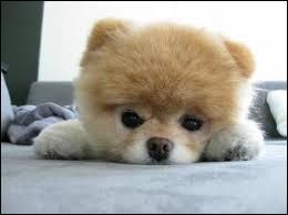 Je suis mignon, quel animal suis-je ?
