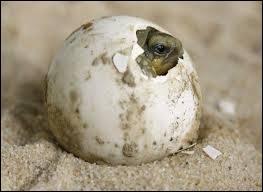 Je sors de mon œuf, quel animal suis-je ?
