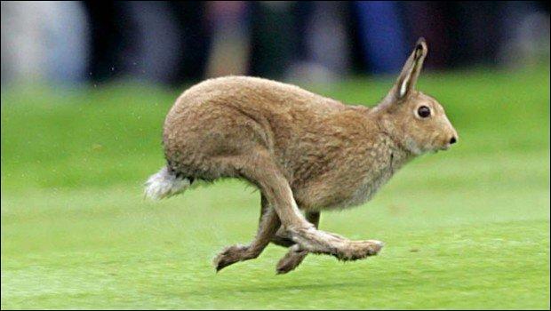 Si tu reconnais l'animal coureur, le titre de ce petit film d'animation te tend les bras !
