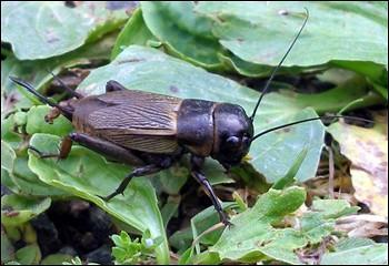 Ce petit insecte fait partie de son univers, si tu ne trouves pas son nom, tu passeras pour un pantin !