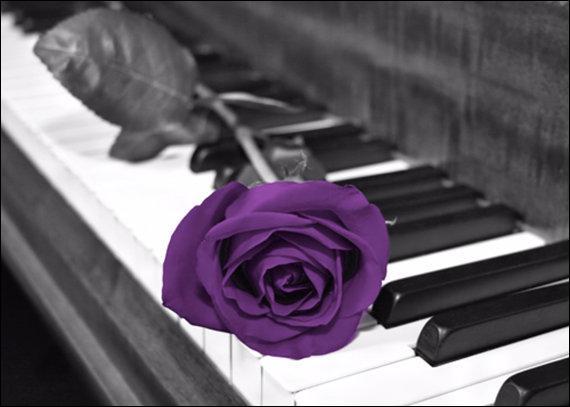 """Qui chantait """"L'important c'est la rose"""" ?"""