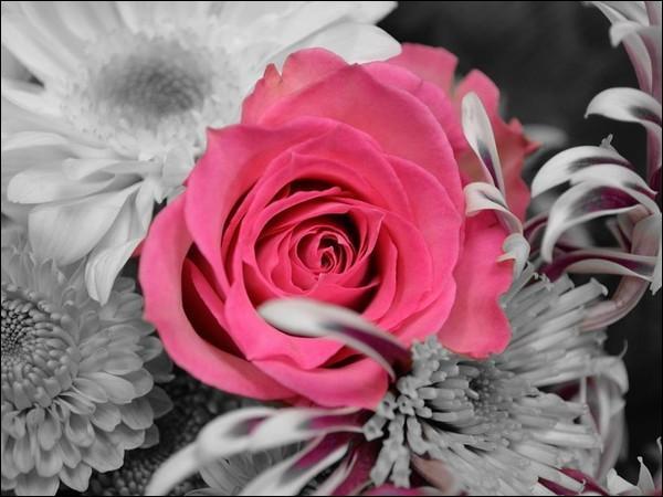 """A qui Ronsard dédiait-il le poème """"Mignonne allons voir si la rose"""" ?"""