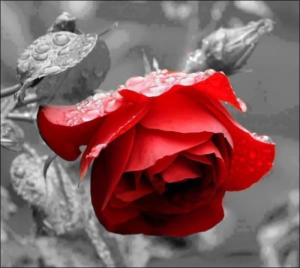 """Mais à qui parlait-il en disant """"Cueillons dès aujourd'hui les roses de la vie """" ?"""