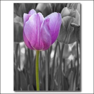 Quelle couleur Alexandre Dumas a-t-il donné à cette fleur dans le titre de l'un de ses romans ?