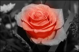 """Qui a écrit """"Le roman de la Rose ?"""