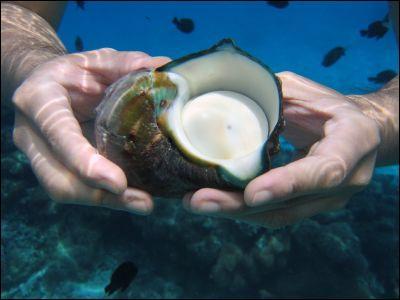 La burgaudine est une belle nacre que donnent les coquilles d'un mollusque des Antilles.Comment appelle-t-on ces coquilles univalves ?