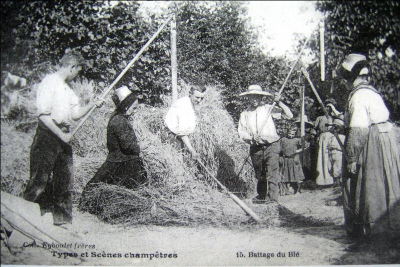 Sous le soleil ardent, les paysans battaient le blé avec...