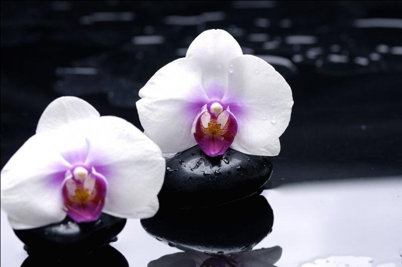 """Qui a écrit """"Pas d'orchidée pour Miss Blandish"""" ?"""
