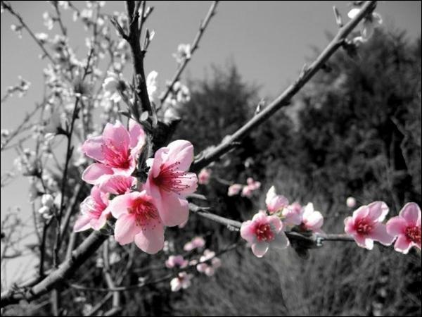 """A qui doit-on """"Les fleurs du Mal"""" ?"""