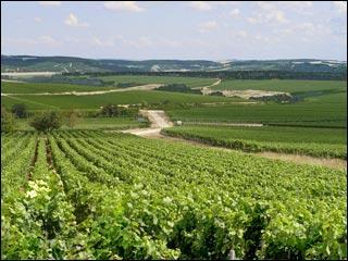 Les Vins d'Alsace proviennent de sept cépages principaux. Lequel de ces cépages n'est pas un cépage d'Alsace ?