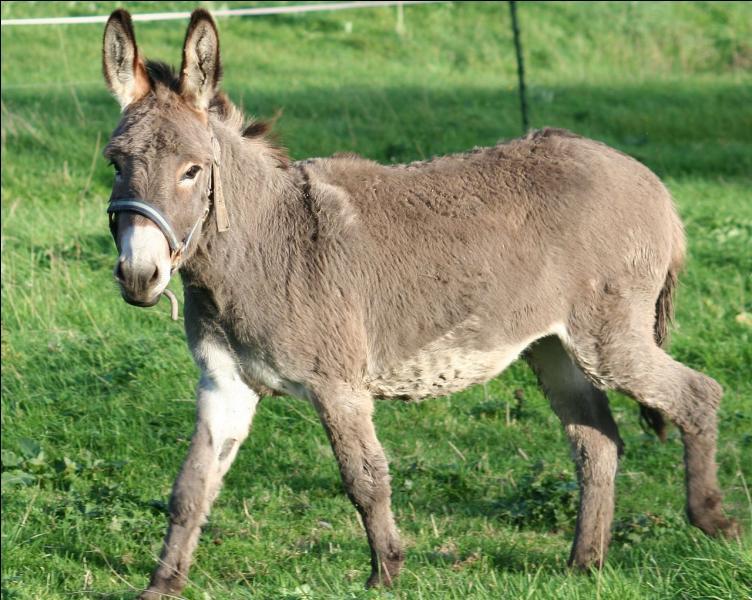 Dans « Le roman de Renart », l'animal représenté sur la photo s'appelle :