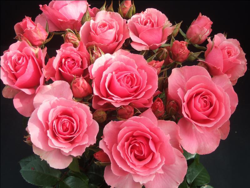 """Vrai ou faux : """"rosa"""" signifie rose."""