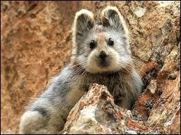 Comment s'appelle ce petit mammifère rare à observer ?