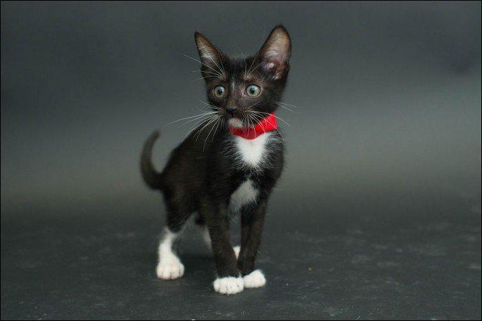 """Qui a écrit """"Blues pour un chat noir"""" ?"""