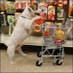 Quizz Un quizz qui a du chien ! - Quiz Photos
