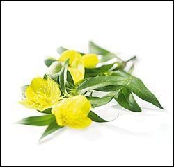 Quizz plantes et vertus quiz vocabulaire francais for Plante synonyme