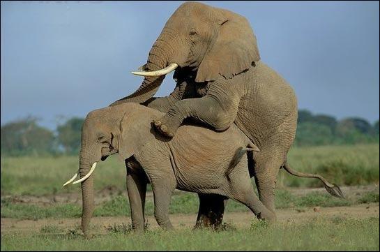 Les animaux surtout sauvages ne sont pas décidés à s'accoupler avec n'importe quel partenaire disponible. qu'est-ce qui compte le plus pour le mâle ?
