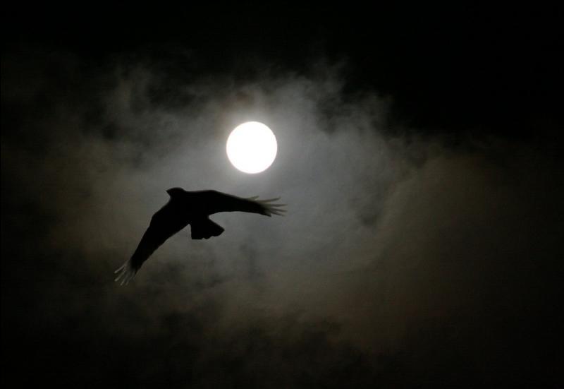A qui pensez-vous en regardant cet oiseau de nuit ?