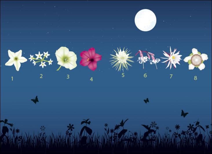 """Il existe une autre fleur nommée """"Belle de nuit"""", de son nom latin Mitabilis Jalapa. Quel numéro porte-t-elle sur cette image ?"""